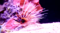 Underwater lionfish and corals. video