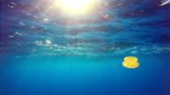 Underwater majesty: yellow jellyfish in blue video