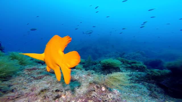 Underwater marine life video