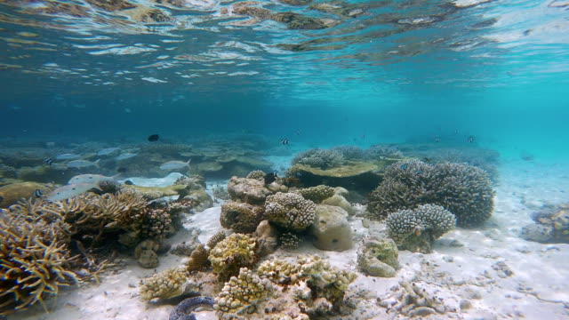 Underwater paradise coral reef on Maldives video