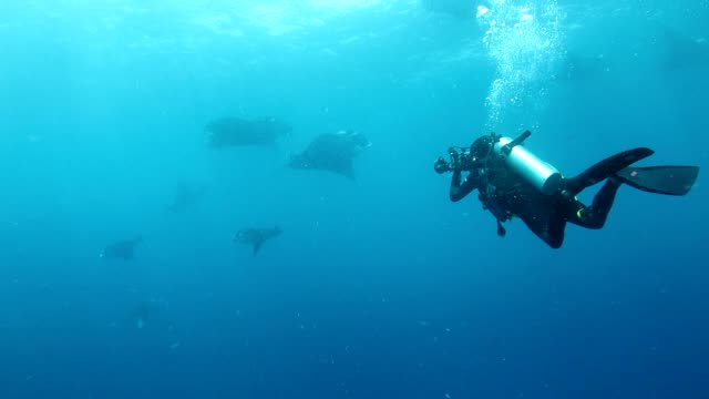 Underwater photographer takes photos with Manta in the sea video