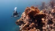 underwater photographer video