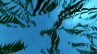Underwater plants waving video