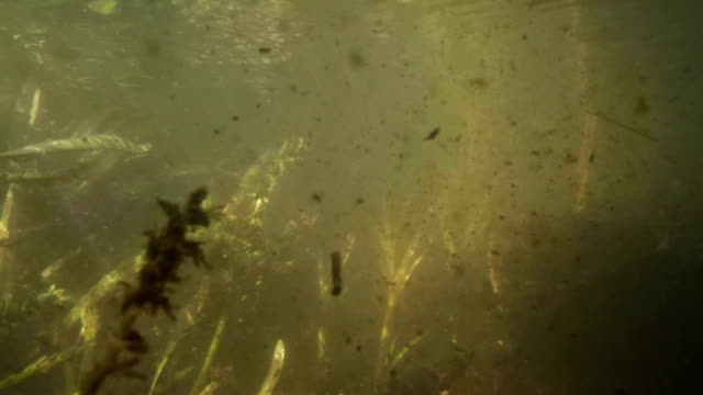 Underwater pollution video