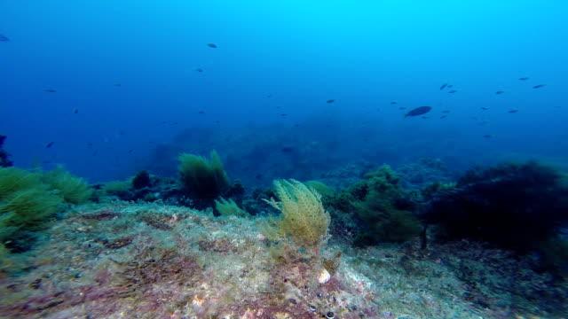 Underwater reef video
