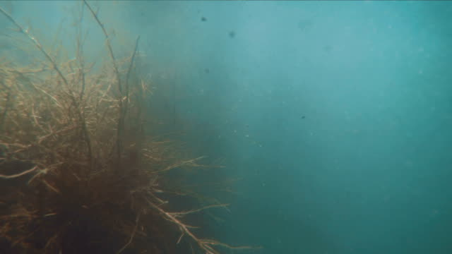 Underwater scene flow with swirls and moving plants on the surface video