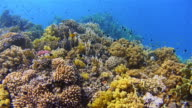 4K Underwater sea life on Coral reef with lot of tropical Fish / Red Sea video