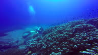 Underwater shoot of scuba divers swimming in blue clear water. video