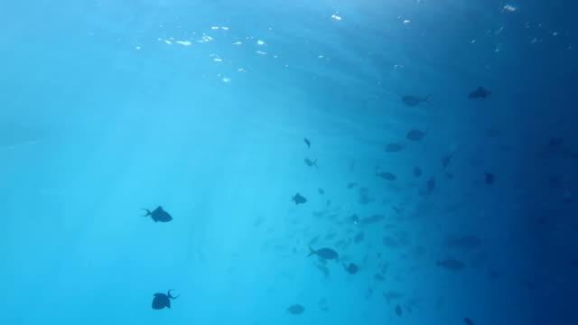 Underwater, Sipadan, Malaysia video