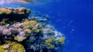 Underwater snorkeling on Coral reef with lot of tropical Fish / Red Sea video