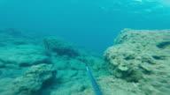 POV underwater spear fishing video
