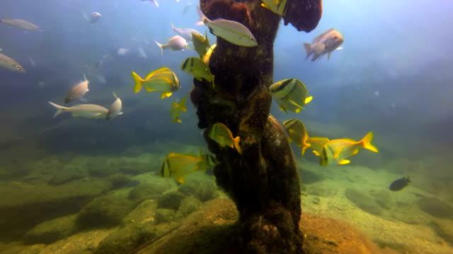 Underwater Statue video