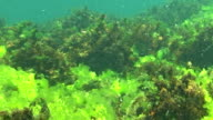Underwater tropical sea theme with fishes and blue water video