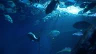Underwater video
