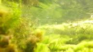 Underwater video snake video