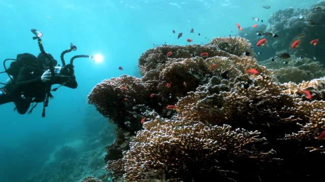 Underwater video video