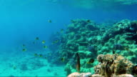 Underwater world with a lot of exotic fish, corals and beautiful sun rays. Butterfly fish of the Red Sea video
