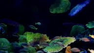 Underwater-coral and fish video
