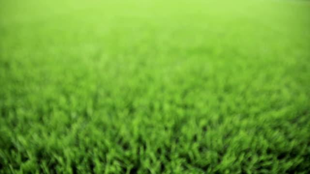 Unfocused green background. Slider shot video