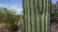 United States, USA, Arizona, Organ Pipe Cactus National Monument video