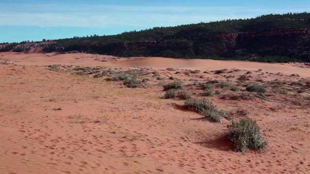 United States, USA, Utah, Coral Pink Sand Dunes State Park video