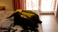 Unpacked professional photo camera backpack on bed in hotel room video