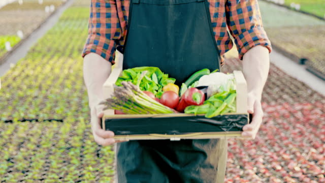 SLO MO Unrecognizable farmer with crate full of vegetables video