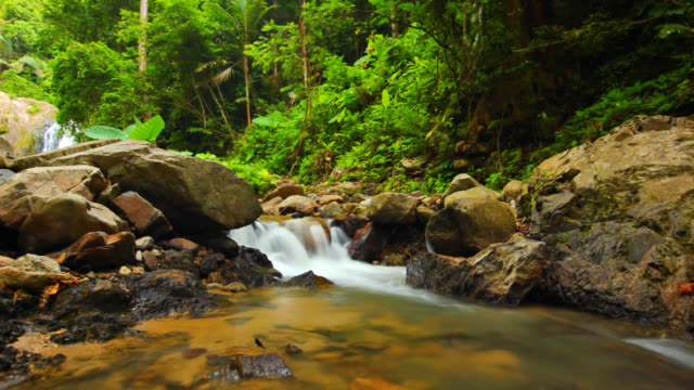 Unusual Waterfall in Green Forest with Streaming video