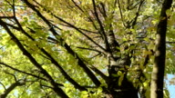 Up to the tree crown. Autumn daytime. Smooth dolly shot. video