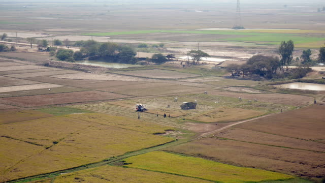 Upper view of a combine harvesting rice crops video