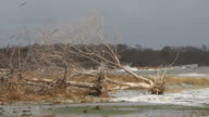 Uprooted trees after Hurricane Sandy video