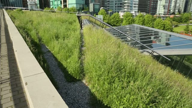 Urban Green Roof Grass, dolly shot video