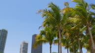 Usa summer day miami downtown palm tops apartment buildings view 4k video