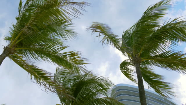 Usa summer rainy day palm tree sky clouds miami beach 4k video