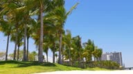 Usa summer sunny day miami downtown palm park traffic panorama 4k video