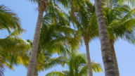 Usa sunny day miami palm tops wind moving 4k florida video