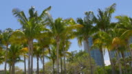 Usa sunny palm tops panorama from miami downtown 4k florida video