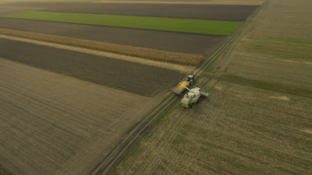 AERIAL Using Combine Harvester For Cutting Corn video