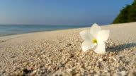 v01467 Maldives beautiful beach background white sandy tropical paradise island with blue sky sea water ocean 4k flower video