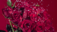 Valentine's Day, water drops on red roses, slow motion video