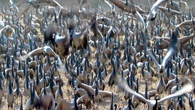 Valley of Cranes video