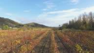 valley vineyards in autumn, aerial video video