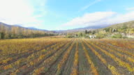 Valley vineyards on background of beautiful mountains, aerial video video