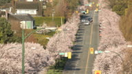 Vancouver Street, Cherry Blossoms video