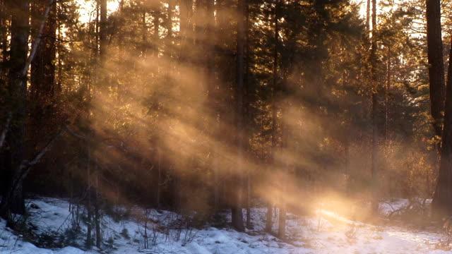 vapor in the woods video