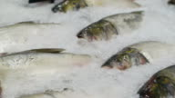 variety Fresh Fish at the market on ice video