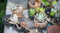 Variety of Small Cactus video