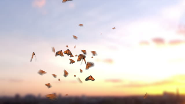 Various Butterflies video