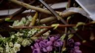 Various details of vegetable life lie on wooden table in art studio video