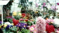 Various flowers on a show-window in the greenhouse video